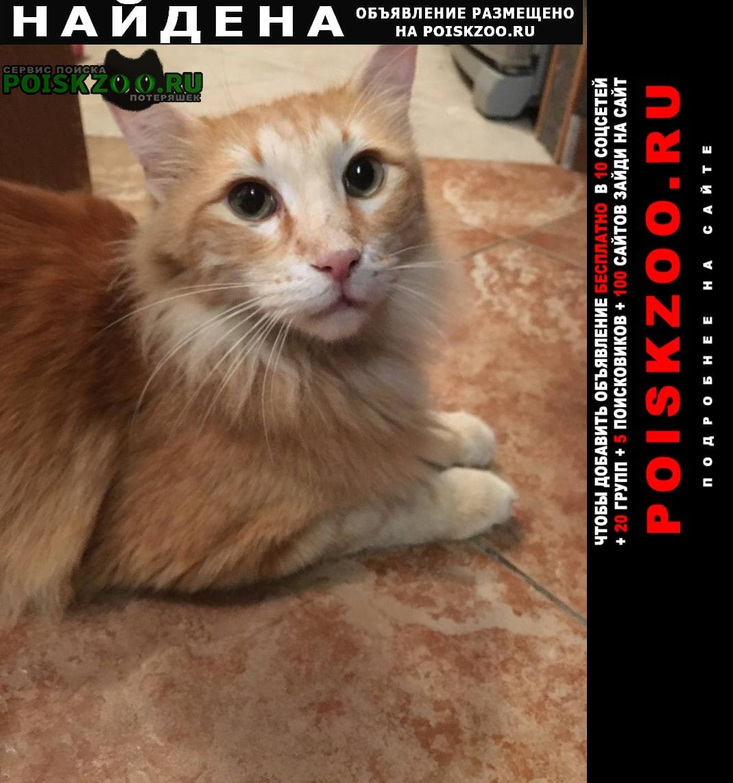 Найдена кошка рыжий кот ( ) Москва
