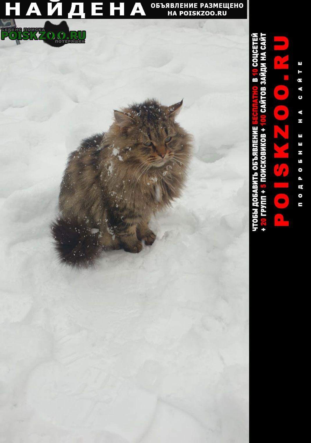 Найдена кошка в с т заречье около д. толстяково, солне Солнечногорск