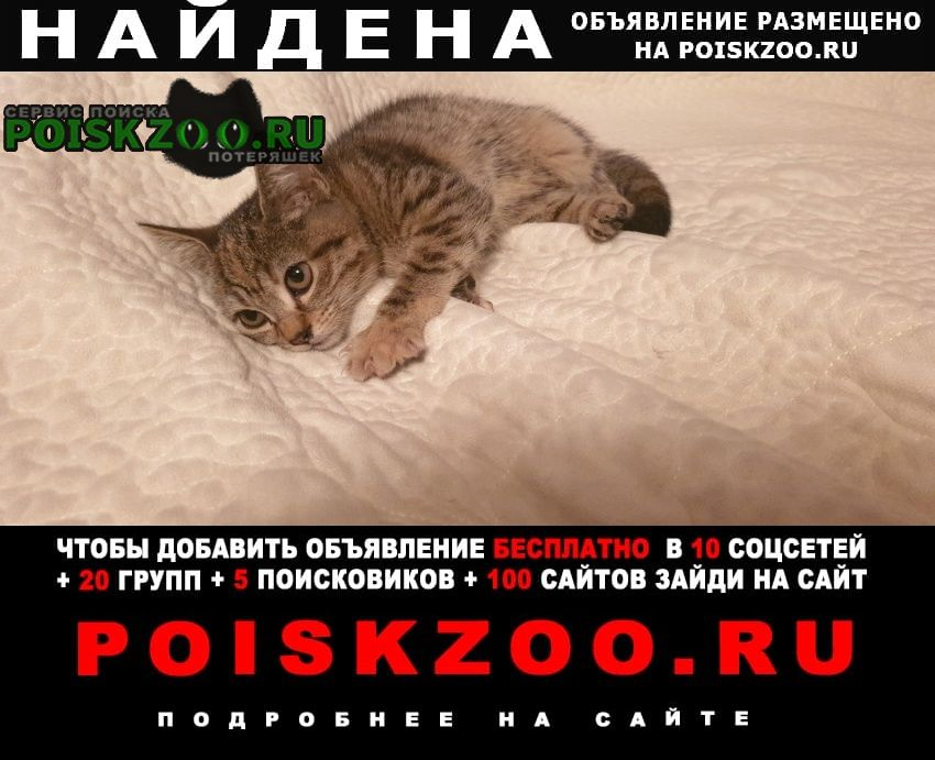 Найдена кошка котенок Анапа