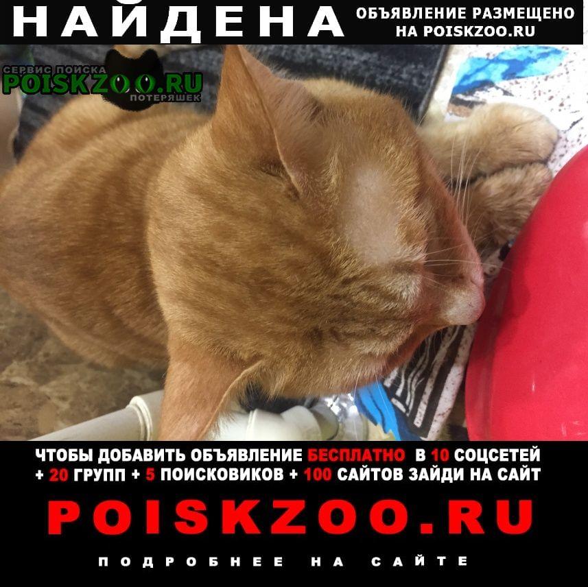 Найден кот Саратов