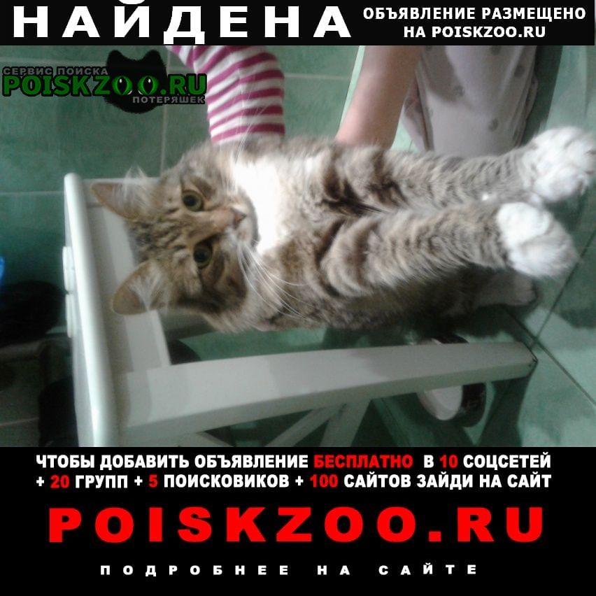 Найдена кошка домашняя потеряшка Нижний Новгород