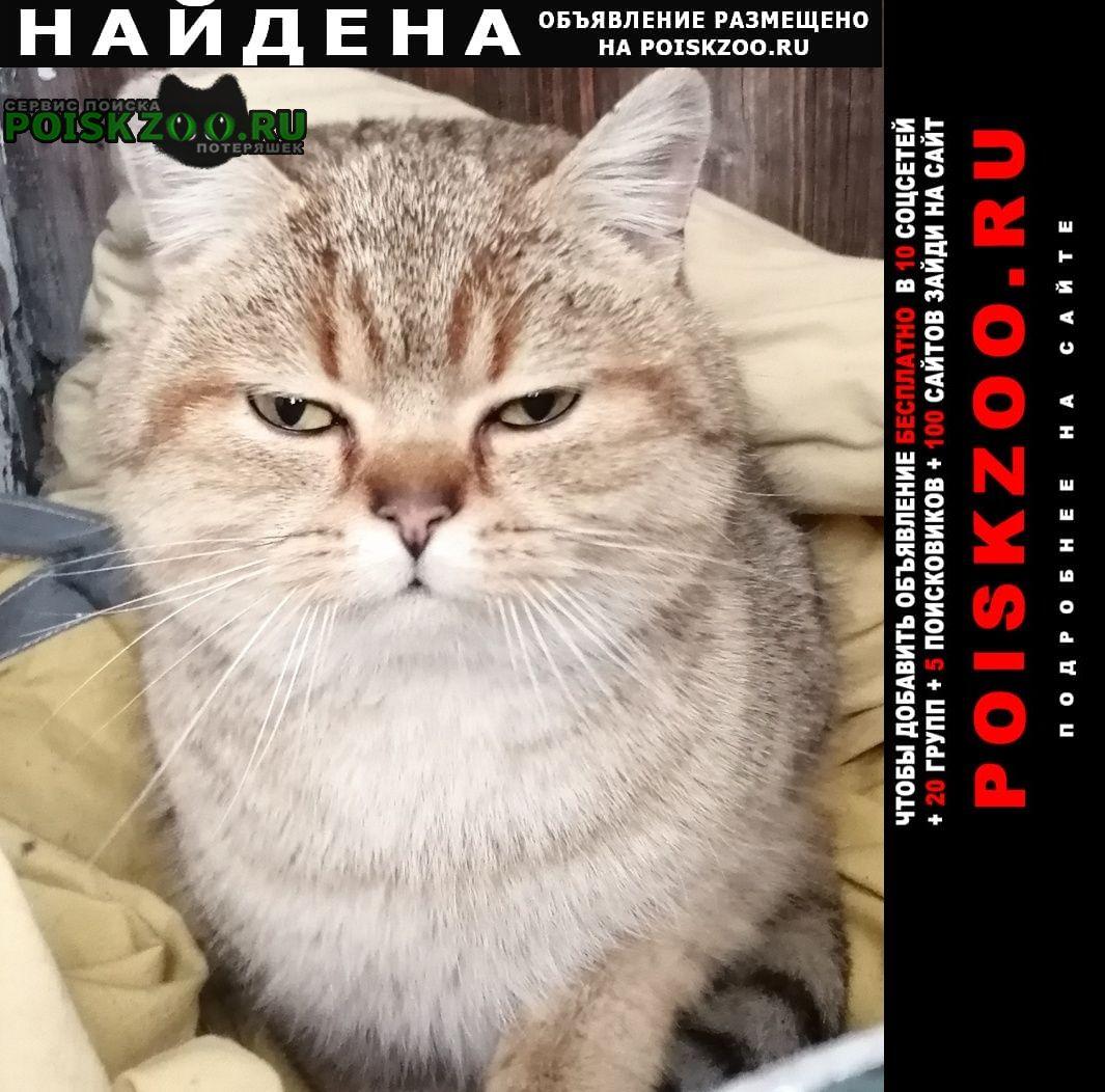Найден кот ищу хозяина Казань