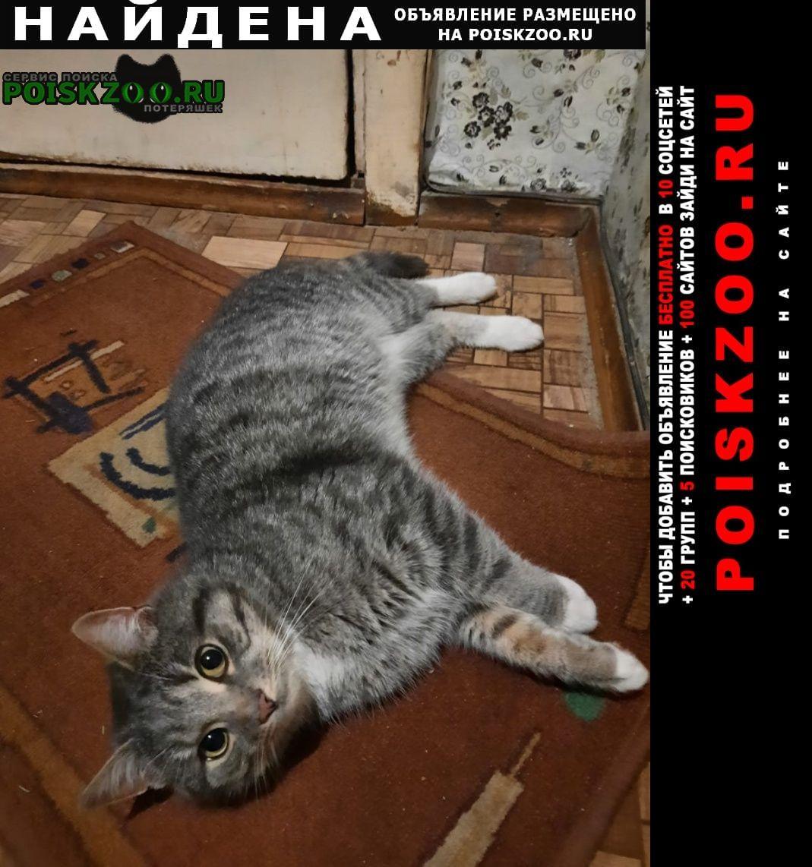 Найден кот Апрелевка