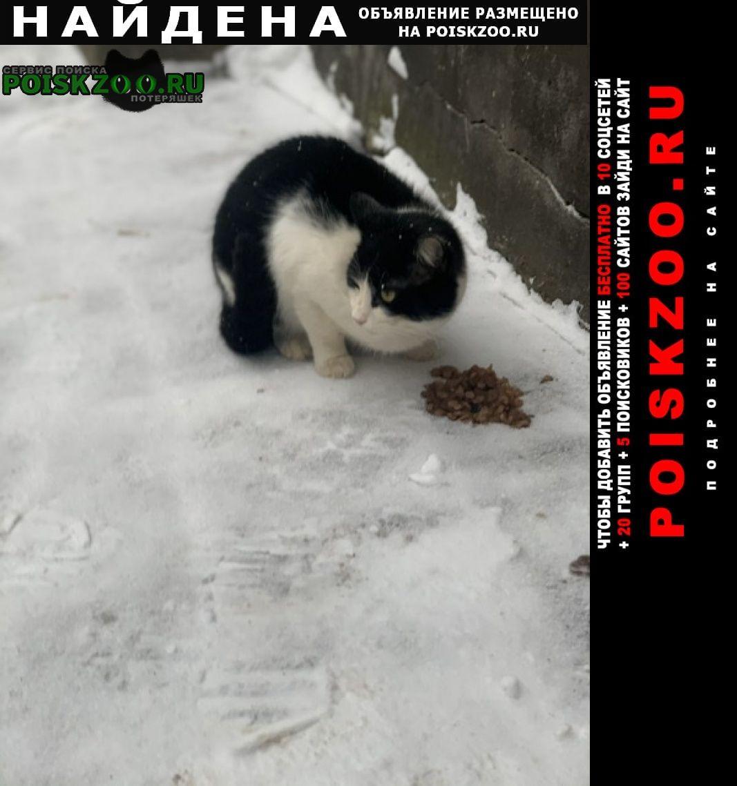 Найдена кошка (кот) Истра
