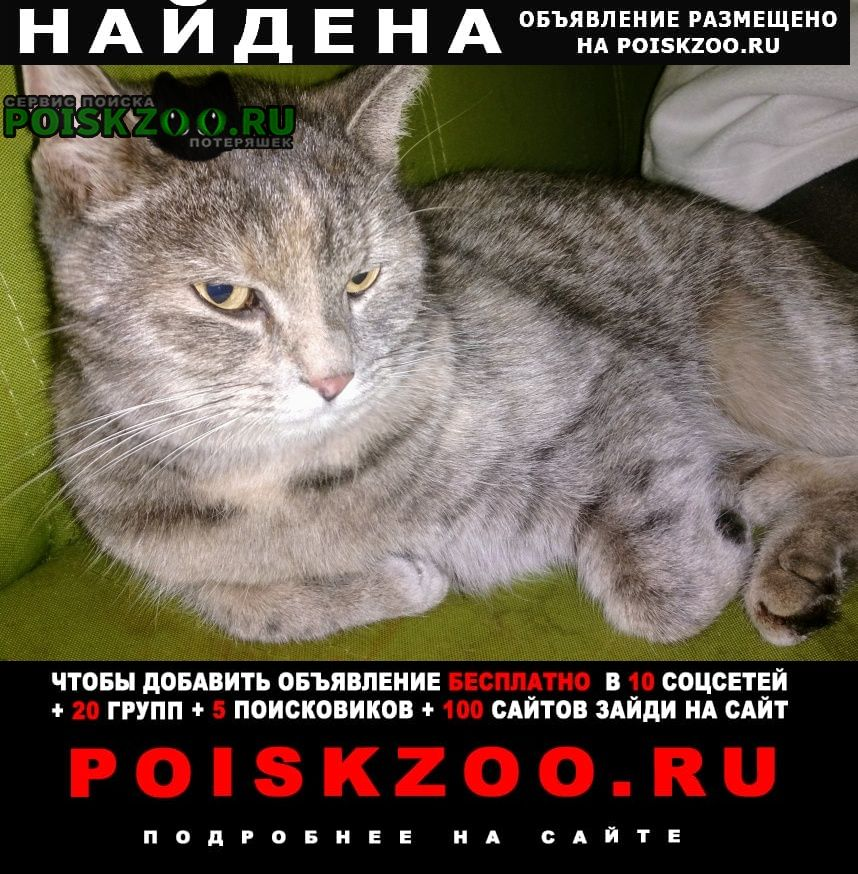 Найдена кошка очень красивого окраса Москва