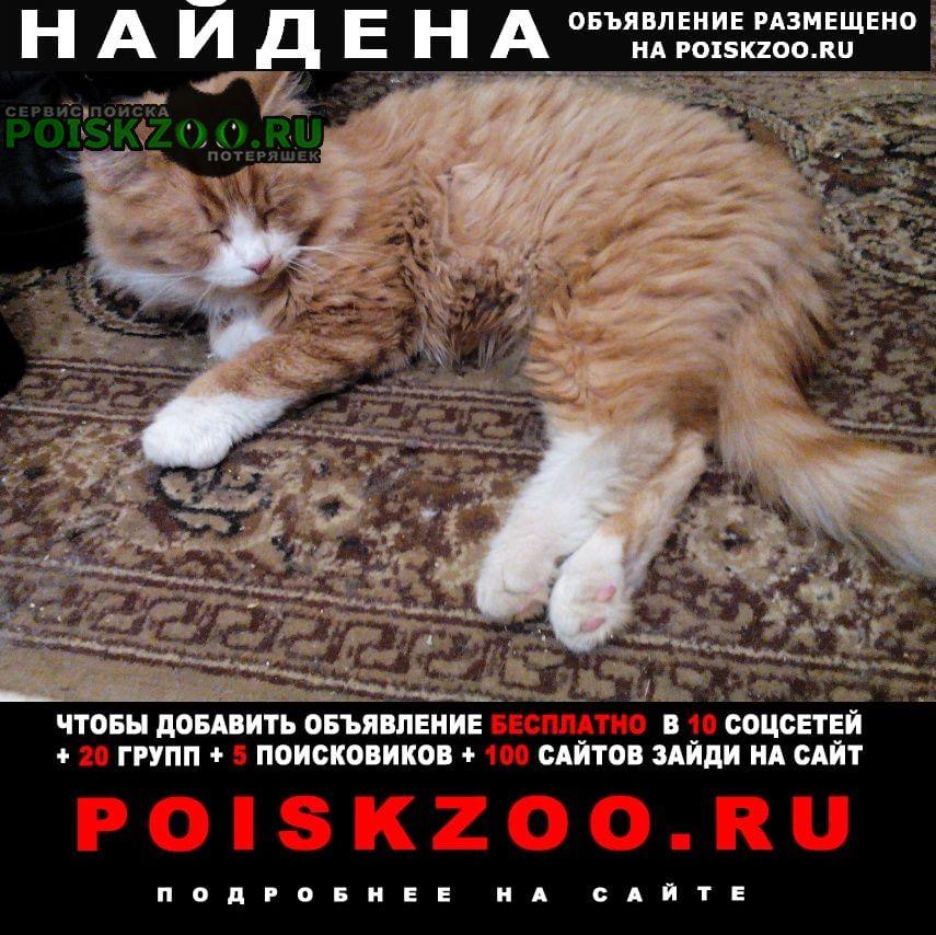 Найден кот 9 января 2021 Пушкино