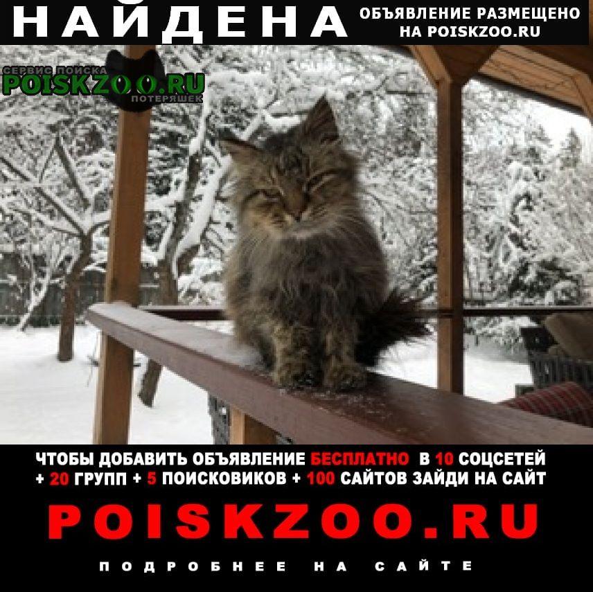 Найден кот Вербилки