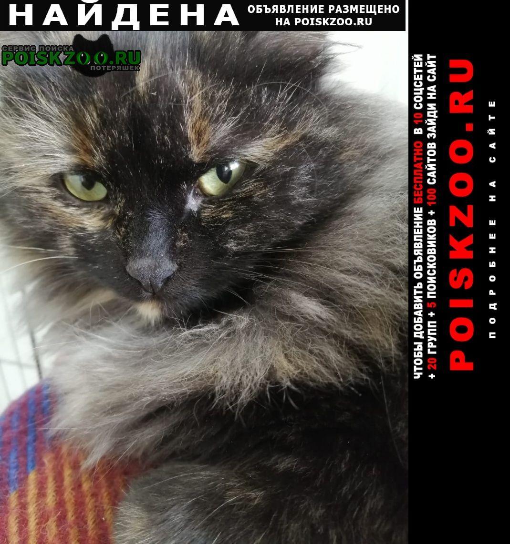 Найдена кошка Ставрополь