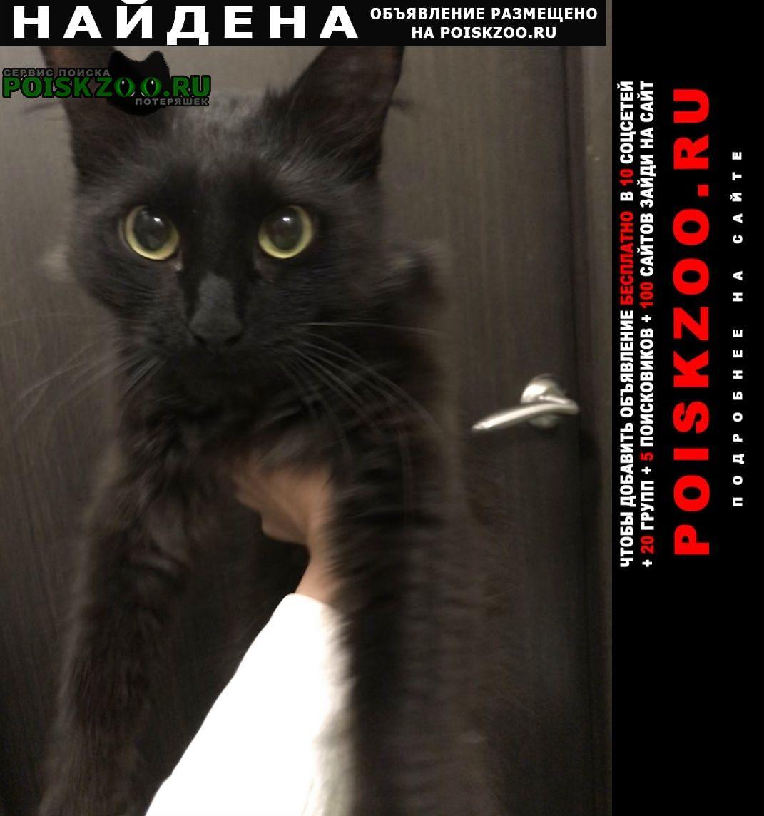 Найдена кошка черная сжм Ростов-на-Дону