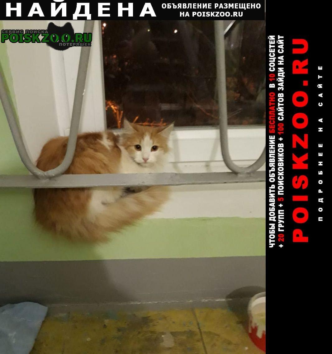 Найдена кошка Долгопрудный