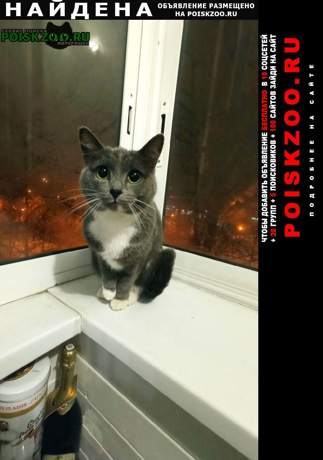 Найдена кошка дымчатая на ул. свободы Москва
