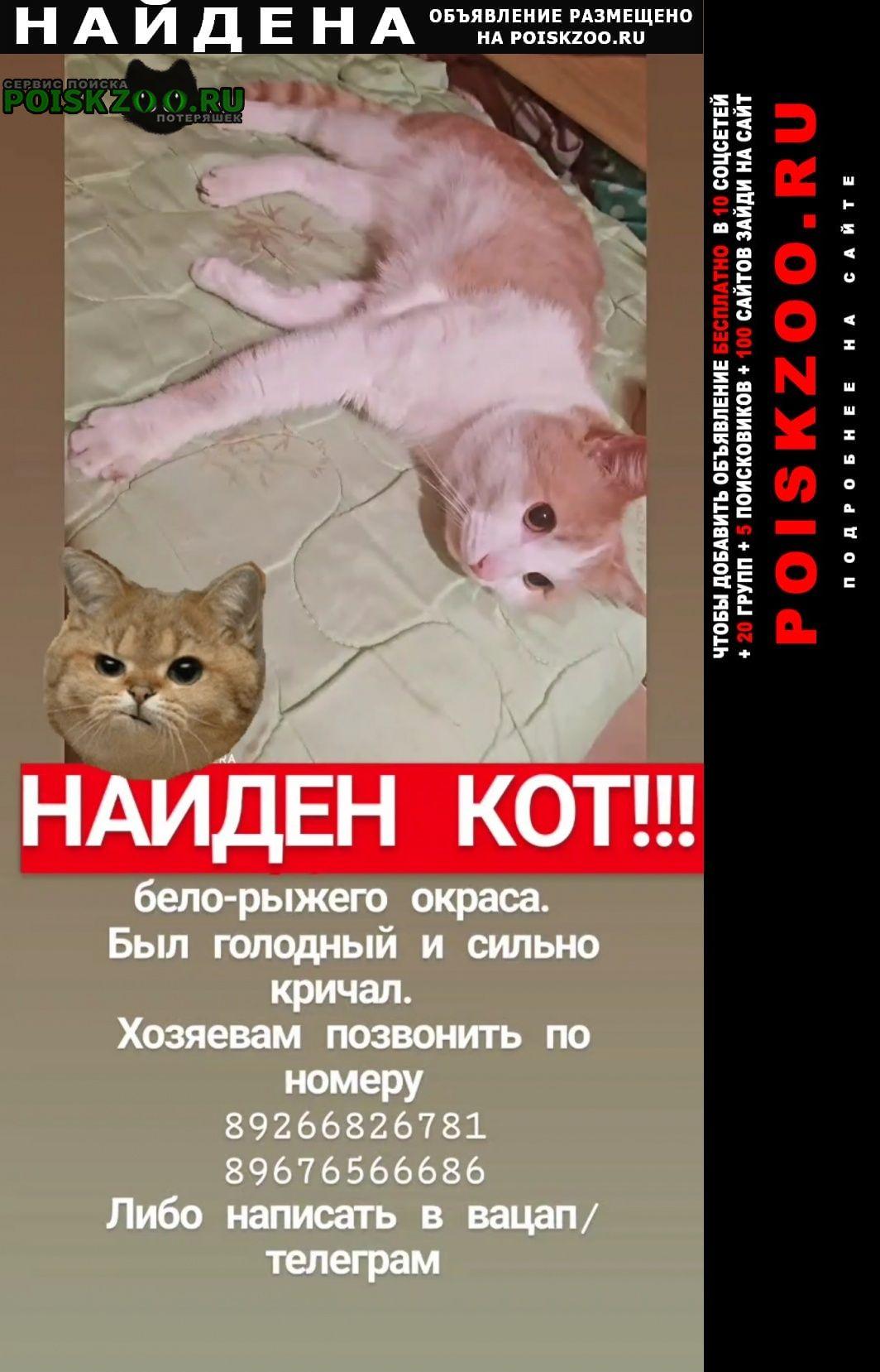 Найдена кошка рыжий кот район чистые пруды Москва