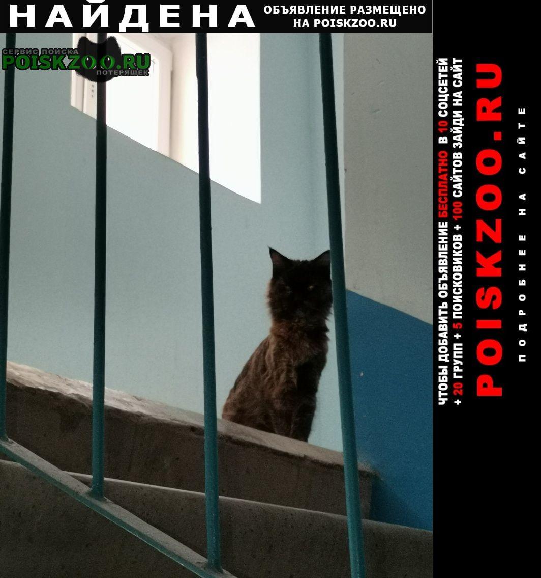 Найдена кошка на ул строителей Стерлитамак