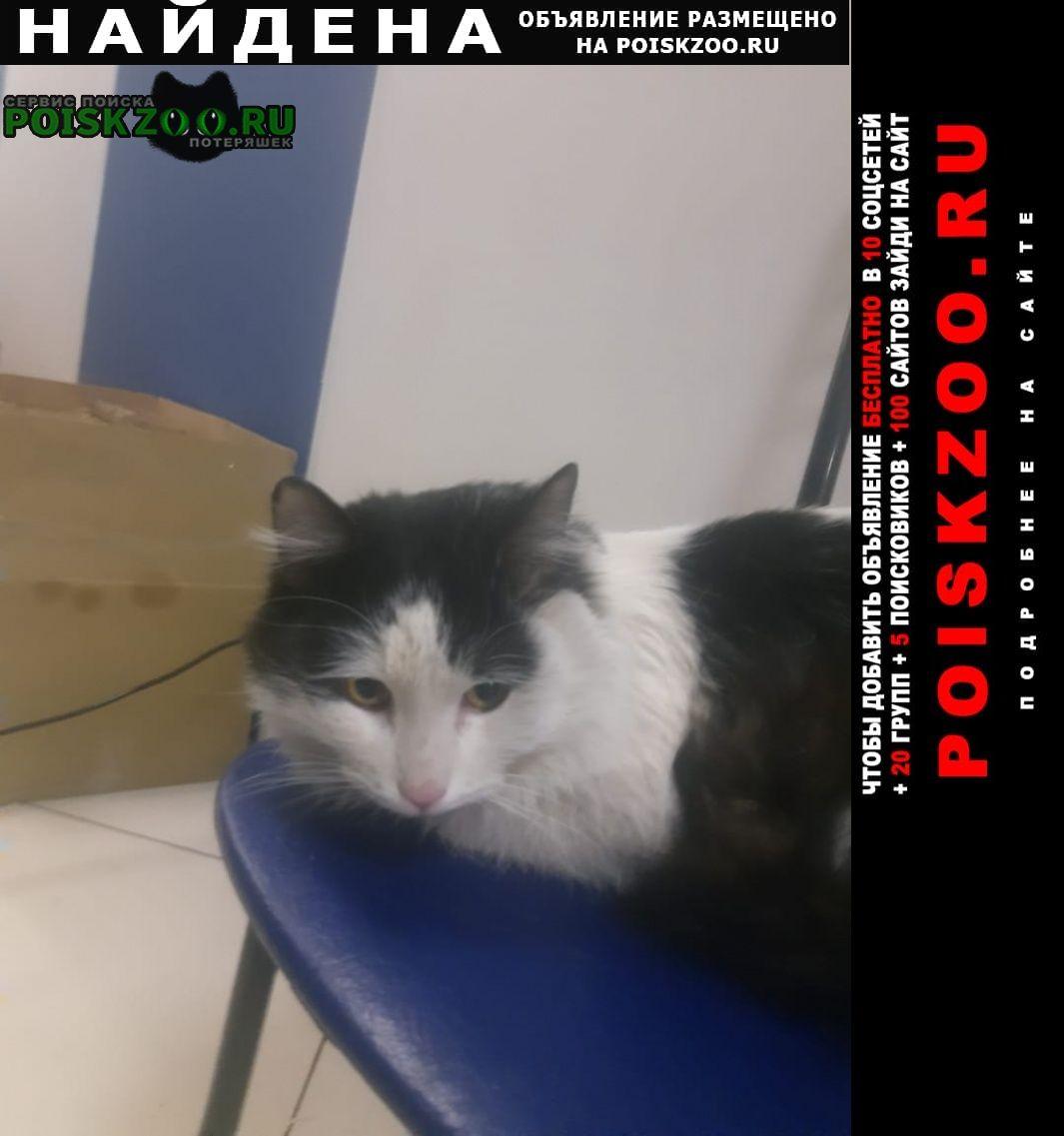 Найдена кошка кот, Санкт-Петербург
