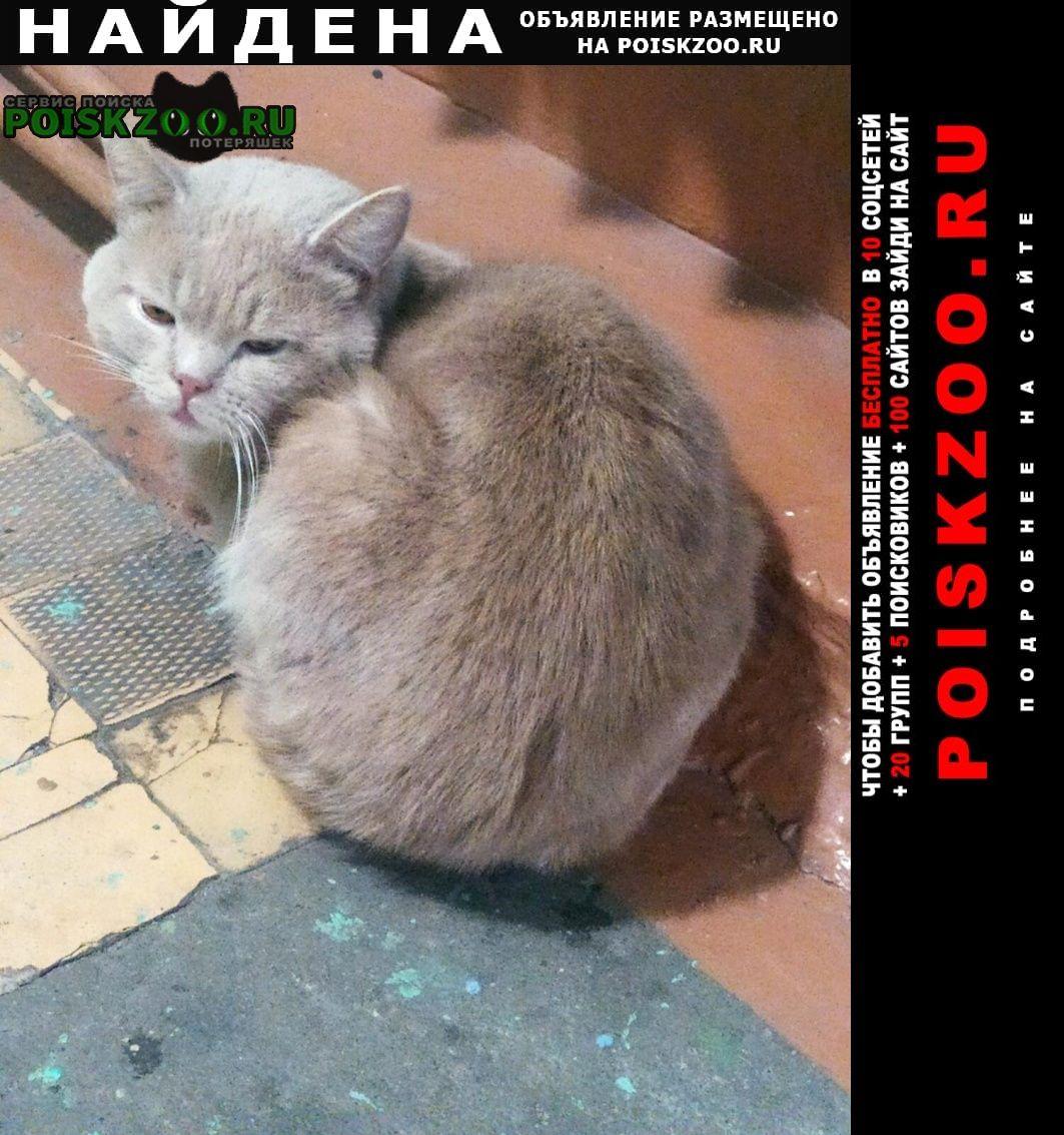Найдена кошка вероятно кот Малаховка