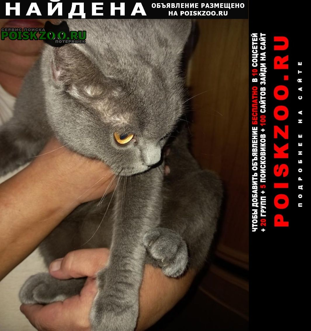 Найдена кошка кот Тула