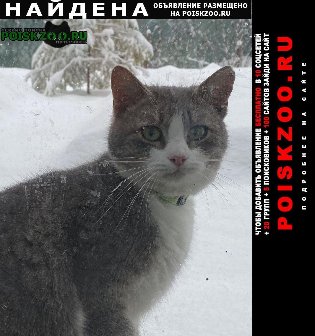 Найдена кошка ласковая Одинцово