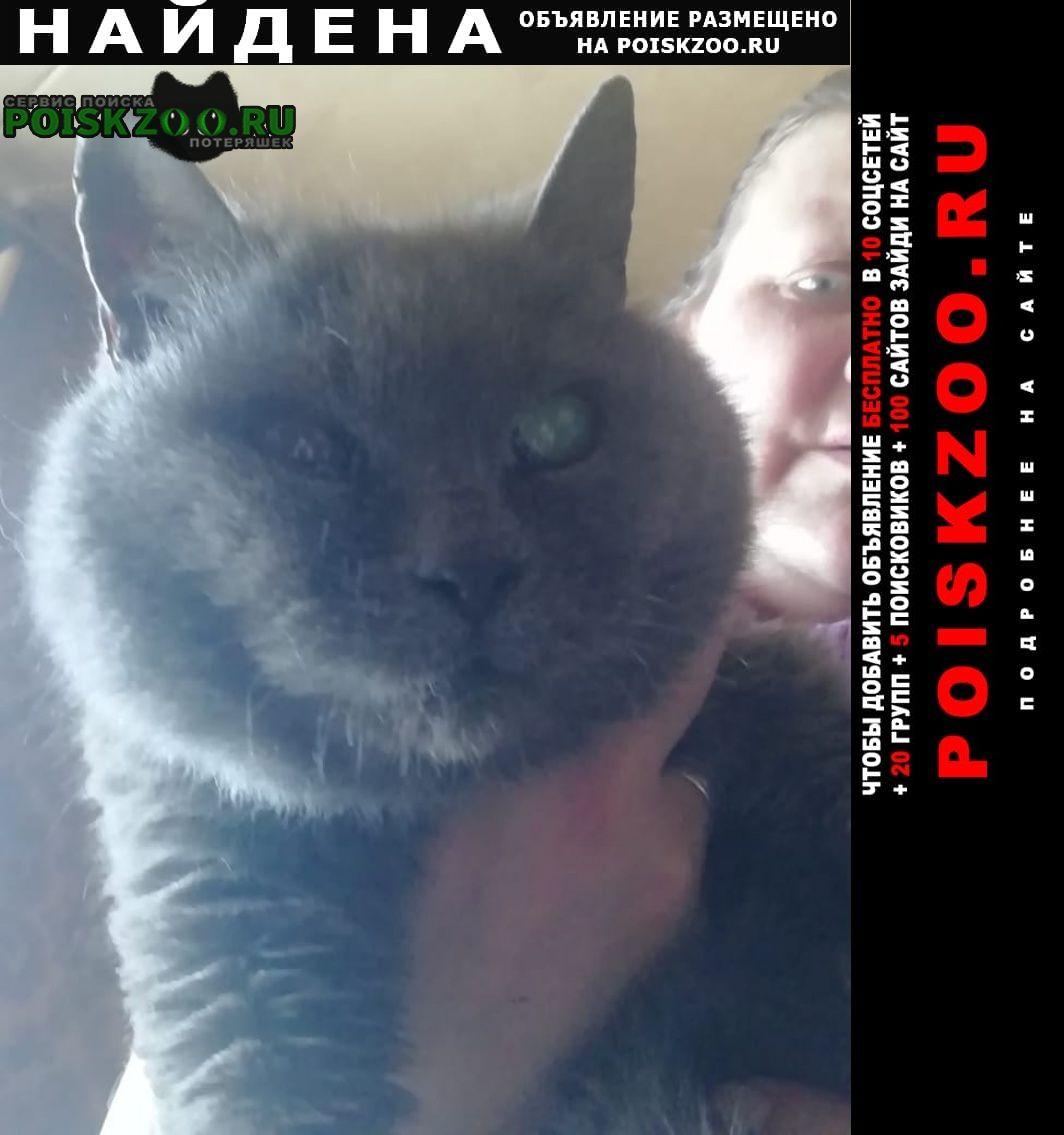 Найдена кошка в районе бусиново Москва
