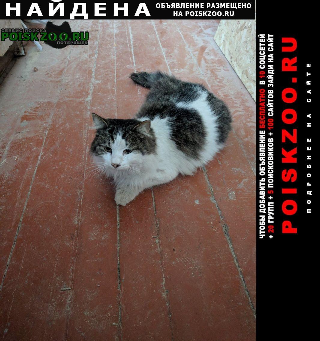 Найдена кошка в районе азовского рынка Новочеркасск