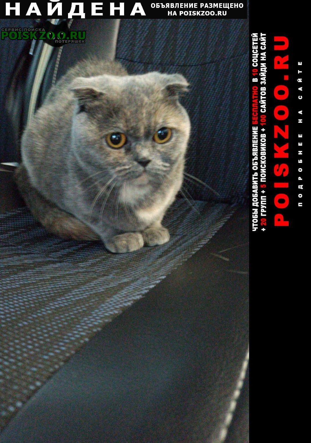 Найден котёнок Санкт-Петербург