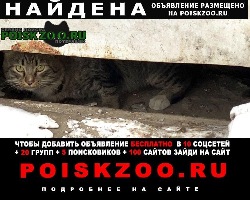 Найдена кошка /кот Москва