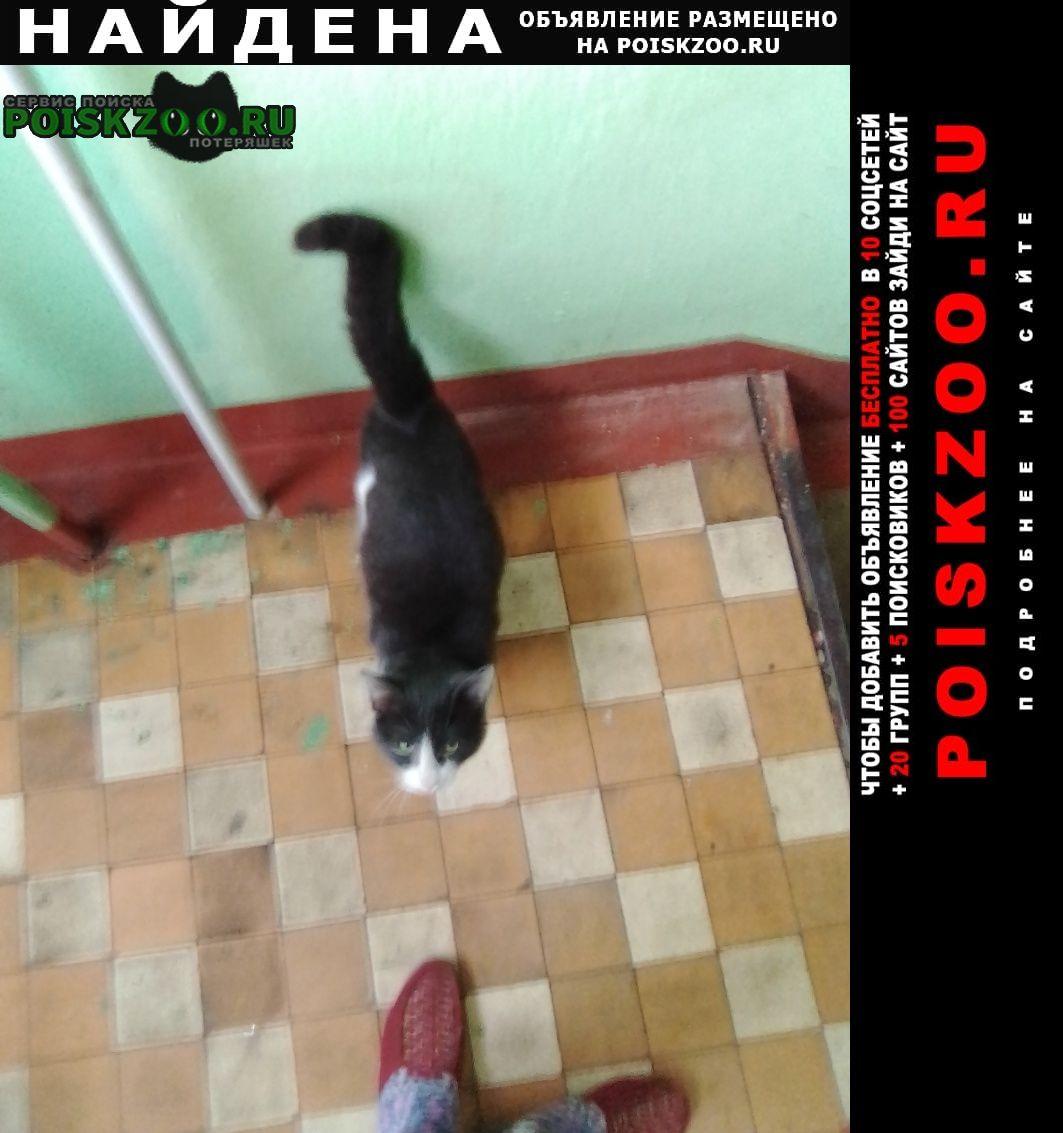 Найдена кошка кот серо-белый в красном ошейнике Химки