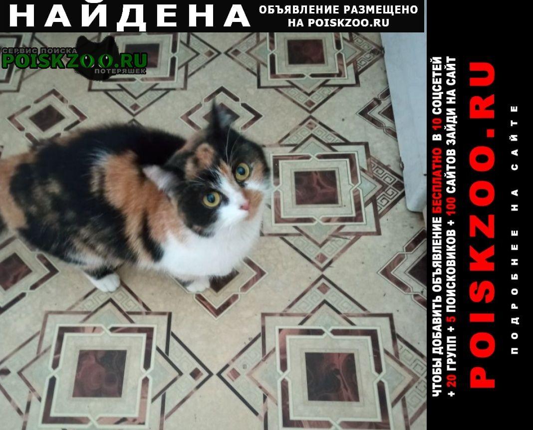 Найдена кошка Мценск