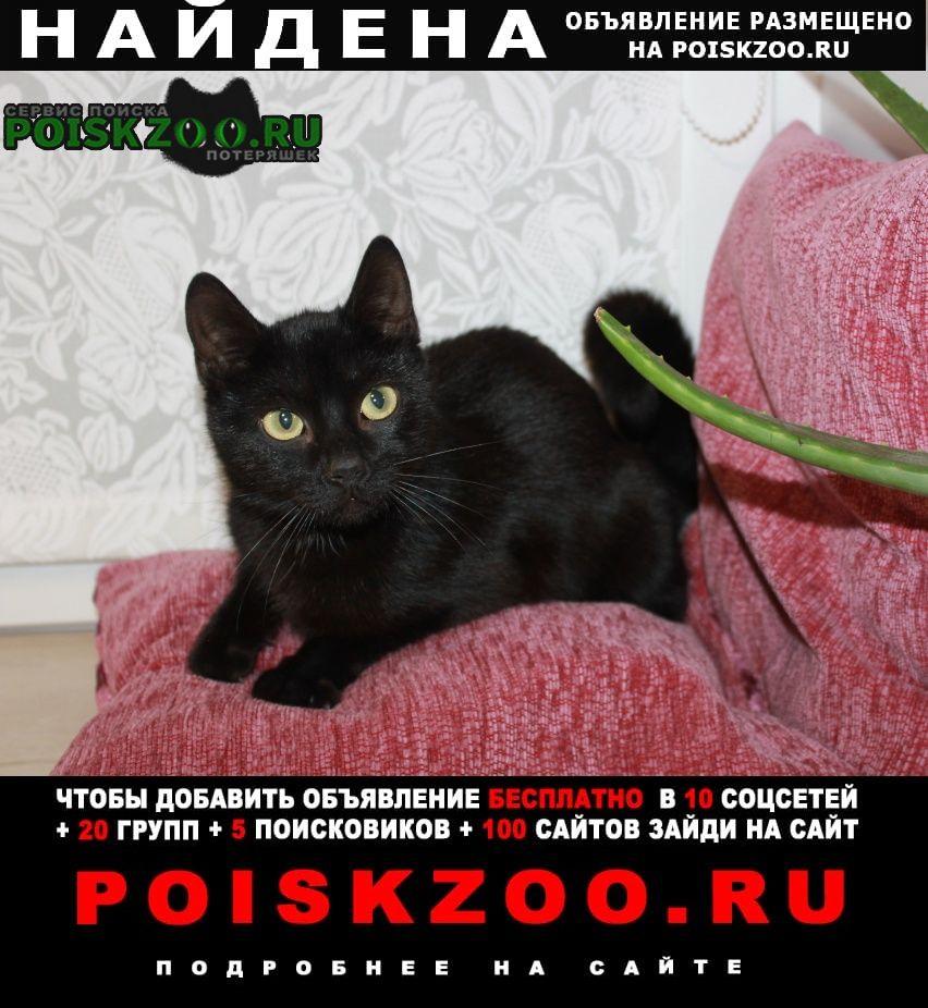 Найдена кошка 6-8 месяцев Вологда