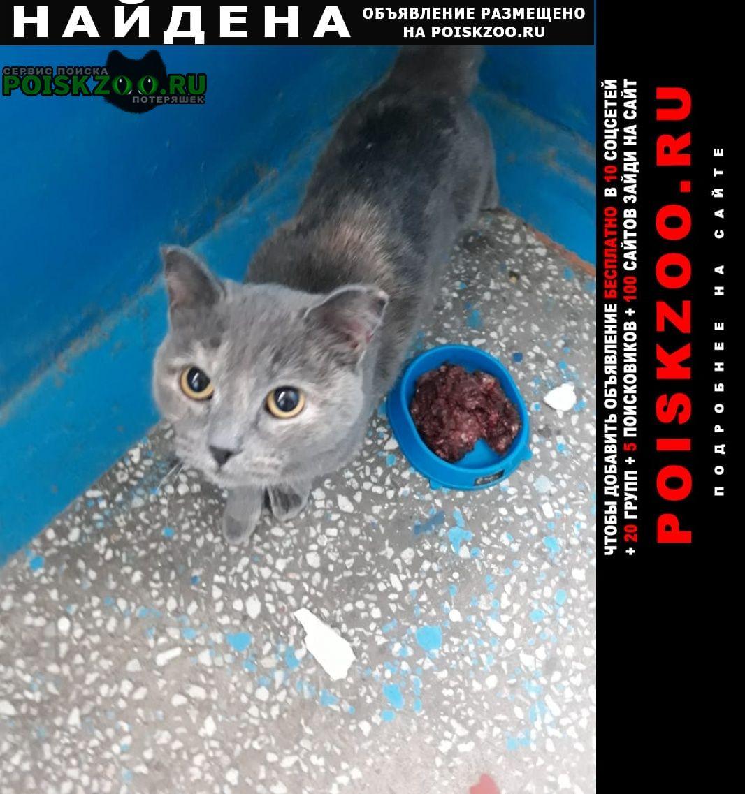 Найдена кошка Барнаул