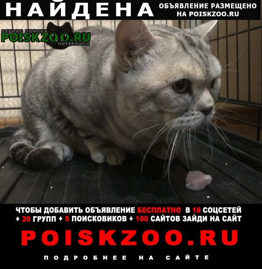 Найдена кошка кот Омск