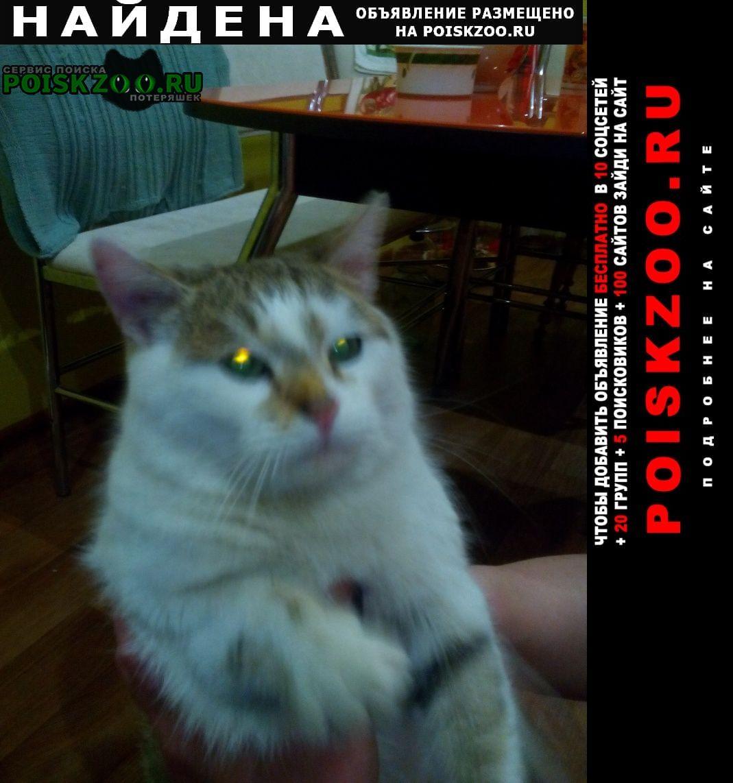 Найден кот Сызрань