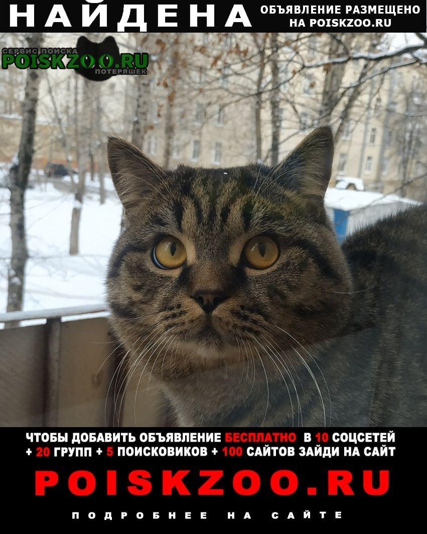 Найдена кошка кот, рядом с метро тушинская. Москва