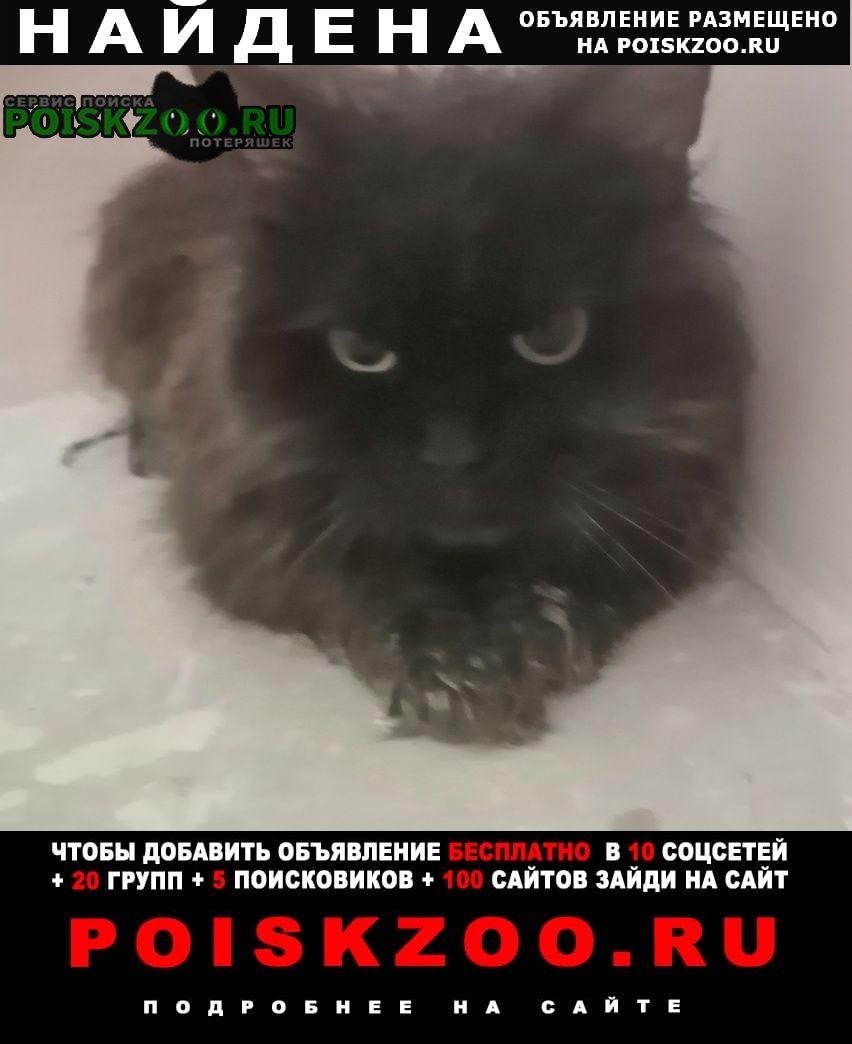 Найдена кошка чёрная (кот) Белгород