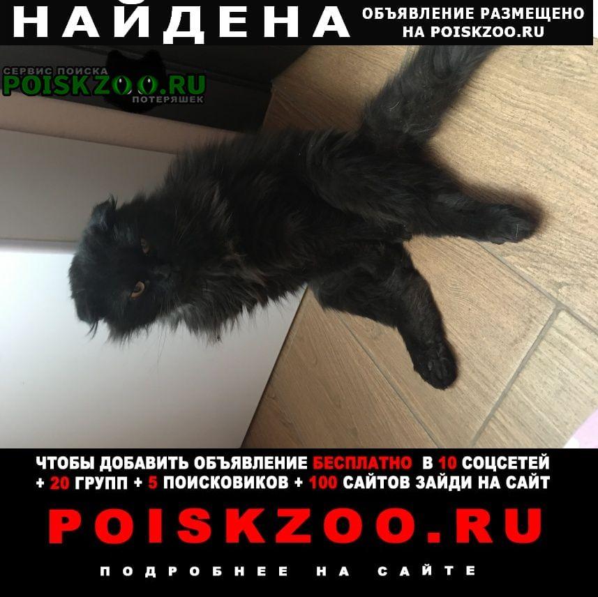 Найдена кошка кот Краснодар