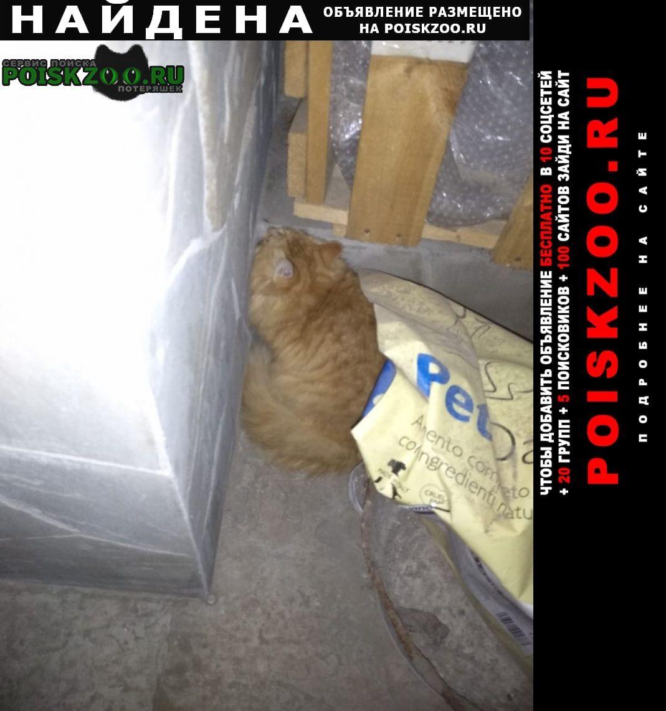 Найдена кошка район мадояна/доватора Ростов-на-Дону