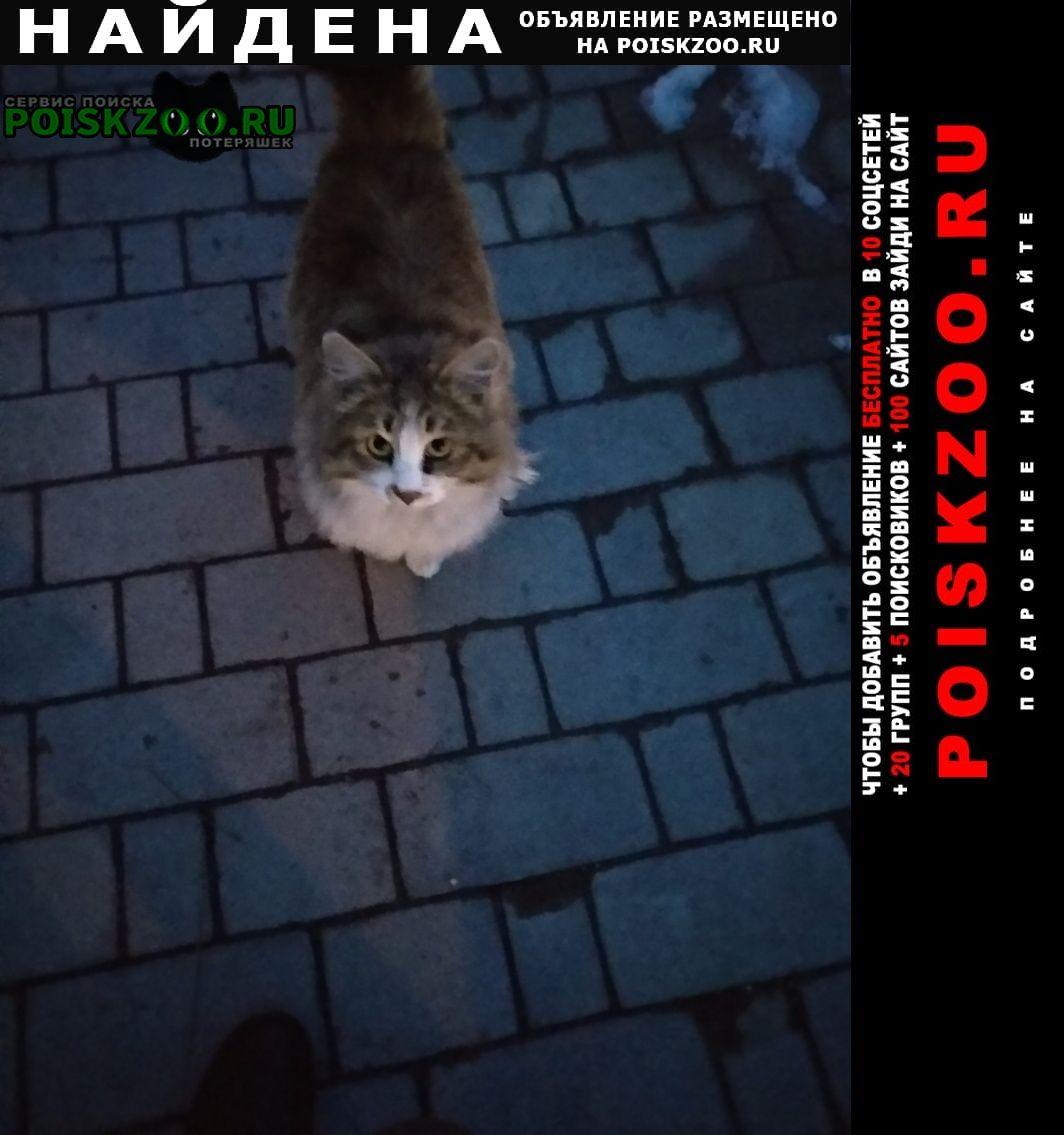 Найдена кошка очень пушистая или кот, домашняя Кисловодск