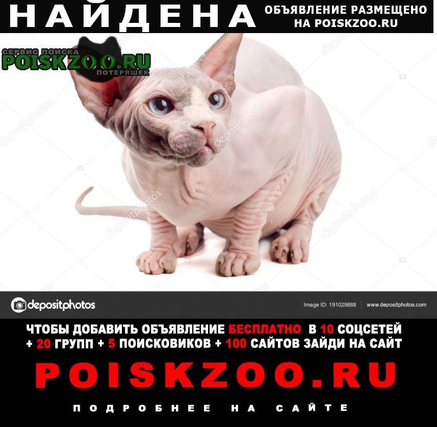 Найден кот сфинкс Анапа