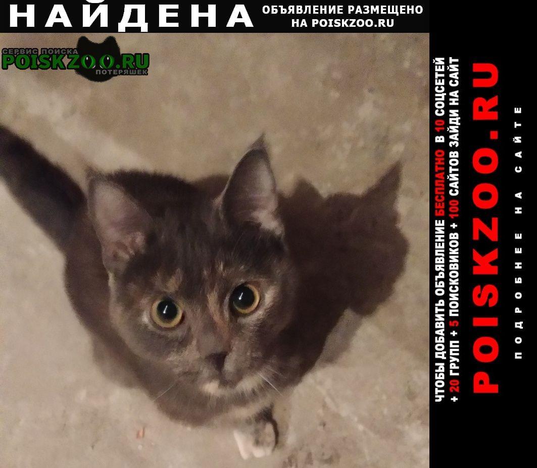 Найдена кошка Тюмень