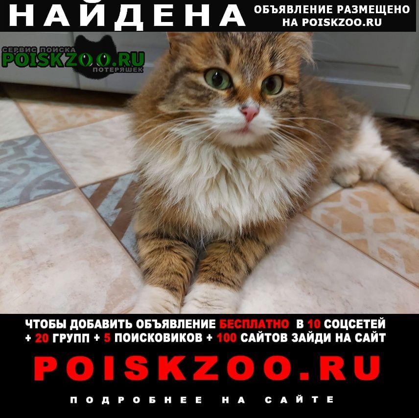 Найдена кошка Видное
