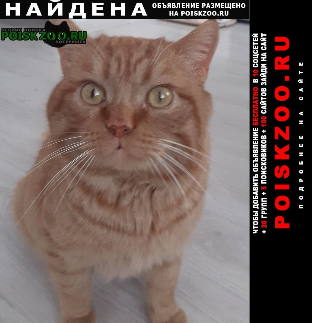 Найден кот Тюмень