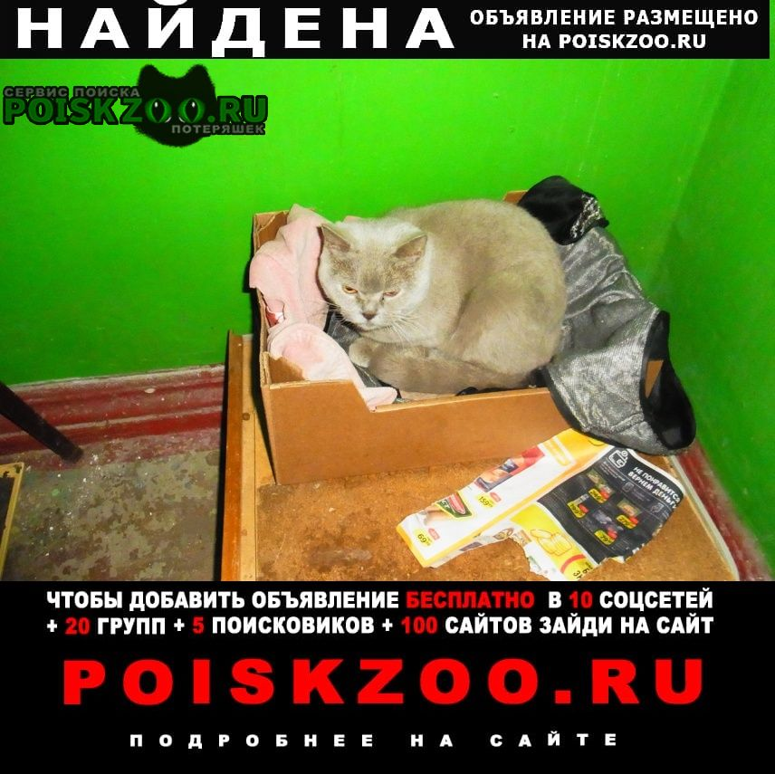 Найдена кошка Брянск