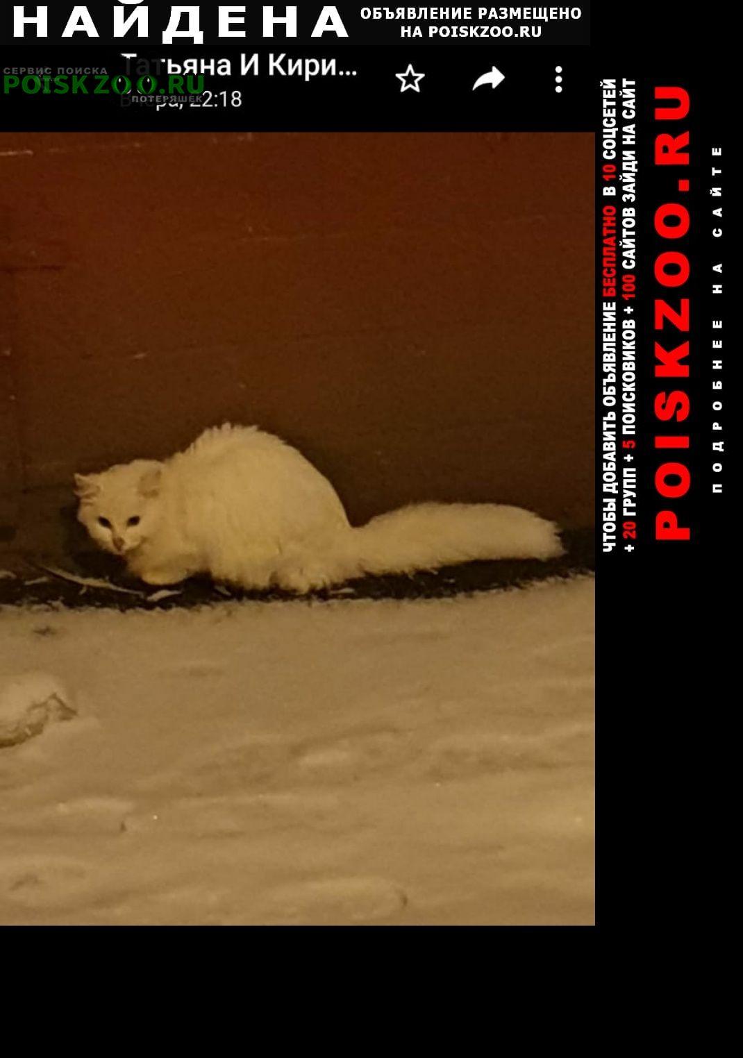 Найдена кошка белая Москва