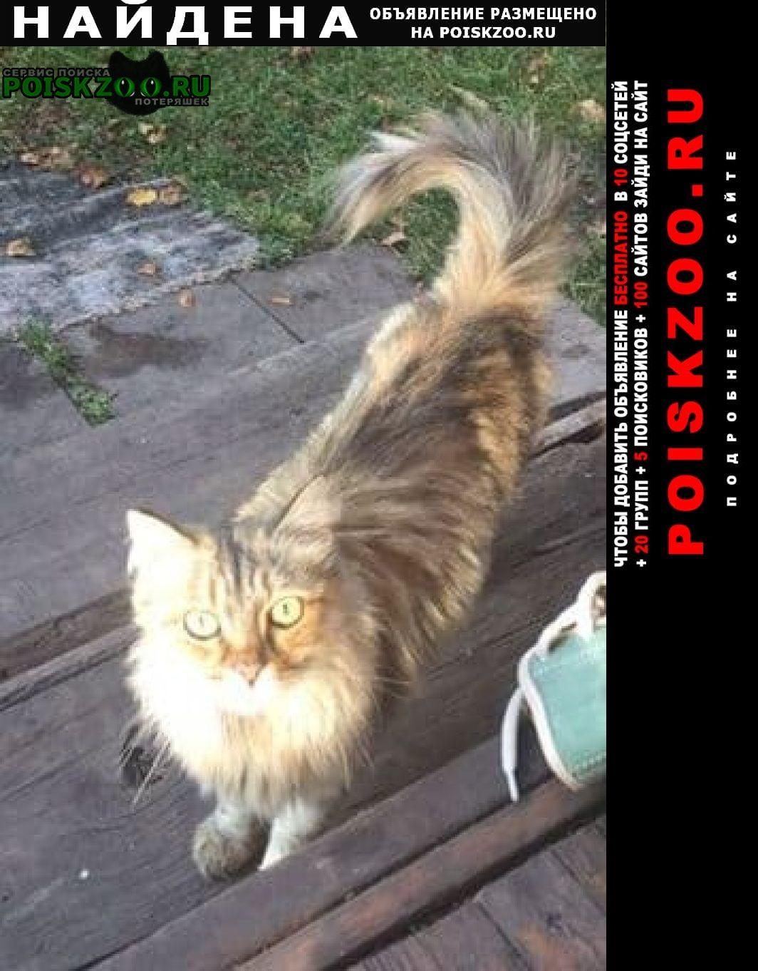Найдена кошка Белоярский (Свердловская обл.)