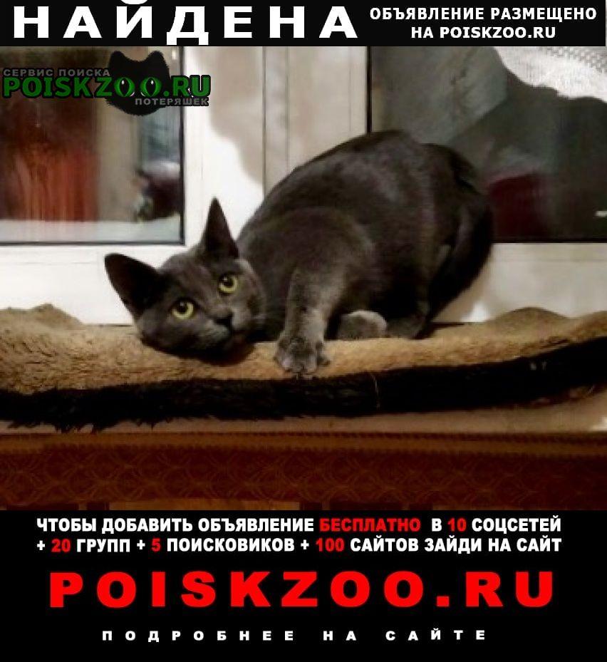 Найдена кошка подросток Москва