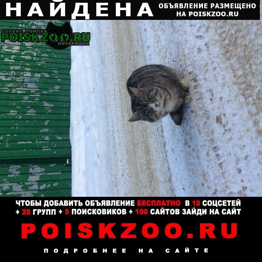 Найдена кошка кот в Деденево