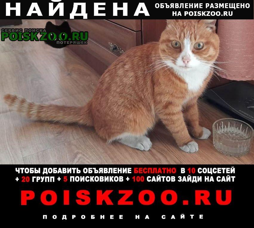 Найдена кошка кот Находка (Приморский край)