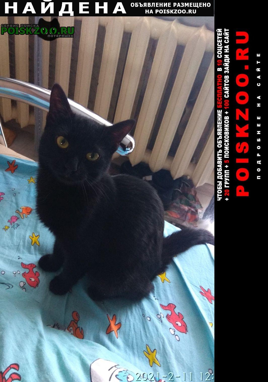 Найдена кошка черная Пермь