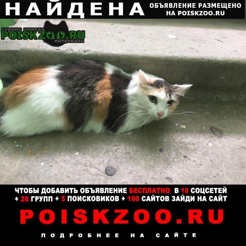 Найдена кошка Тольятти