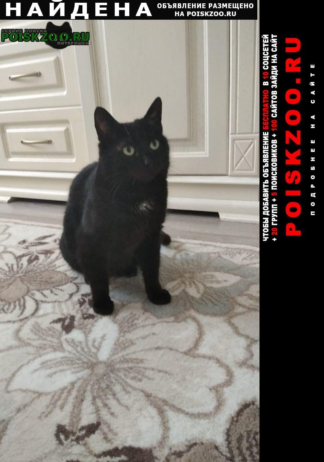 Найдена кошка с.новопетровское Истра