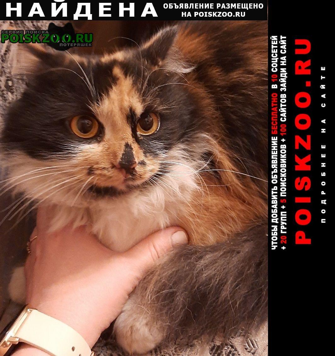 Найдена кошка ярославский район Москва